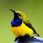 SVE in Spagna Birdlife